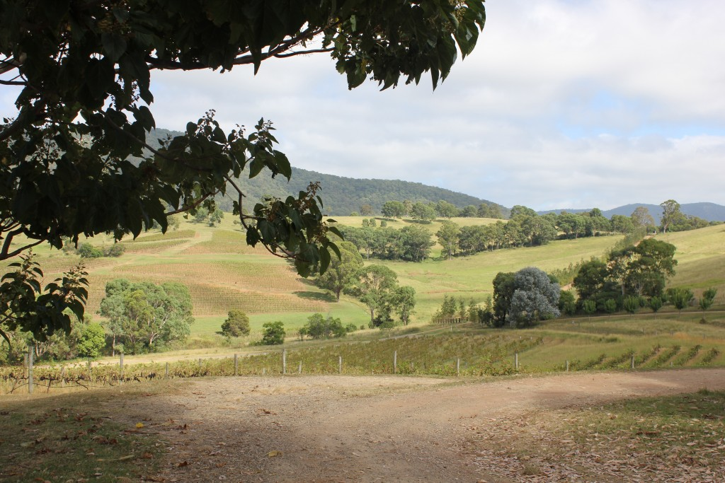 A weekend in the Hunter Valley